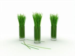 ws_Lemon_grass_1152x864
